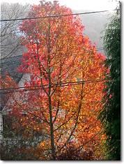 arbre automnal